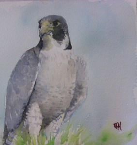 Hawk Watercolour